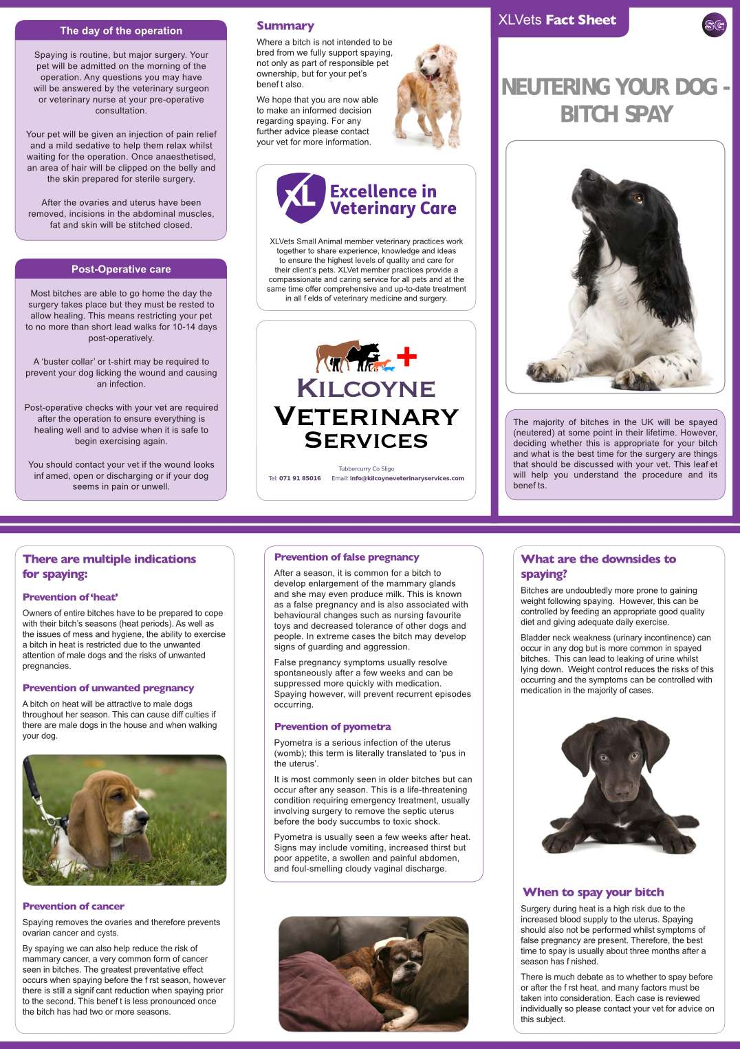 kilcoyne_veterinary_services_xlvets_factsheet_bitch_spay
