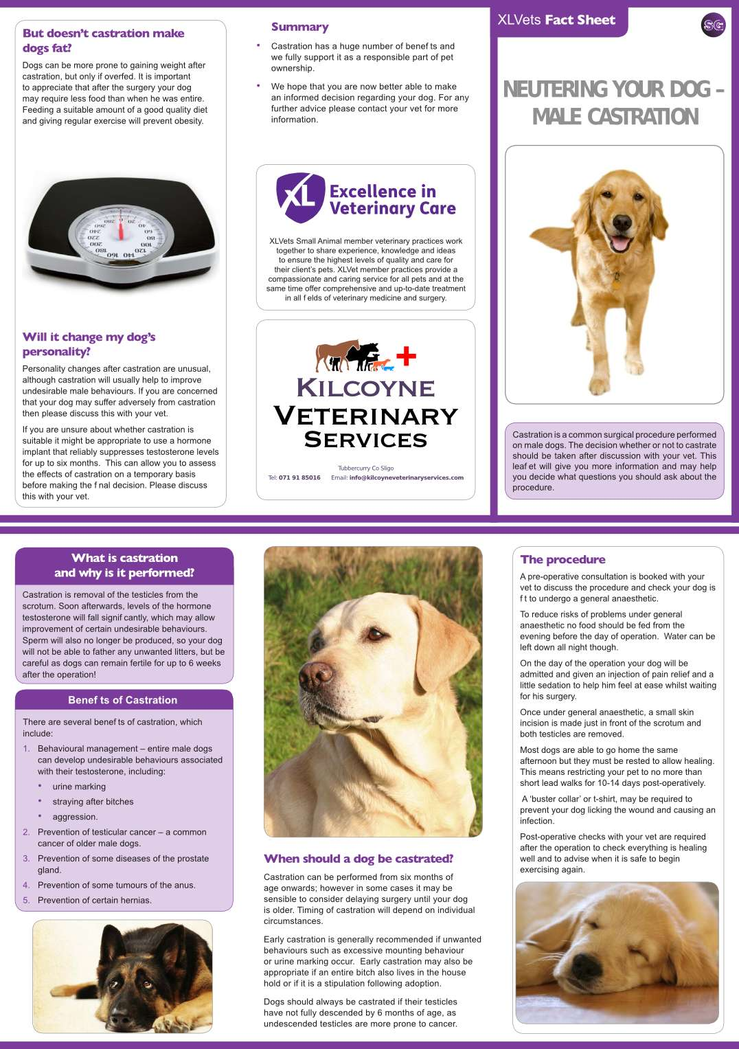 kilcoyne_veterinary_services_xlvets_factsheet_castration